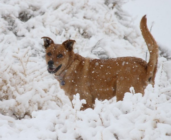 protect your pets in winter weather