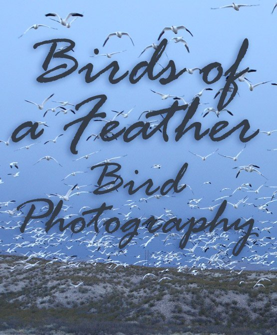 A Bird in the Hand — Bird Photography