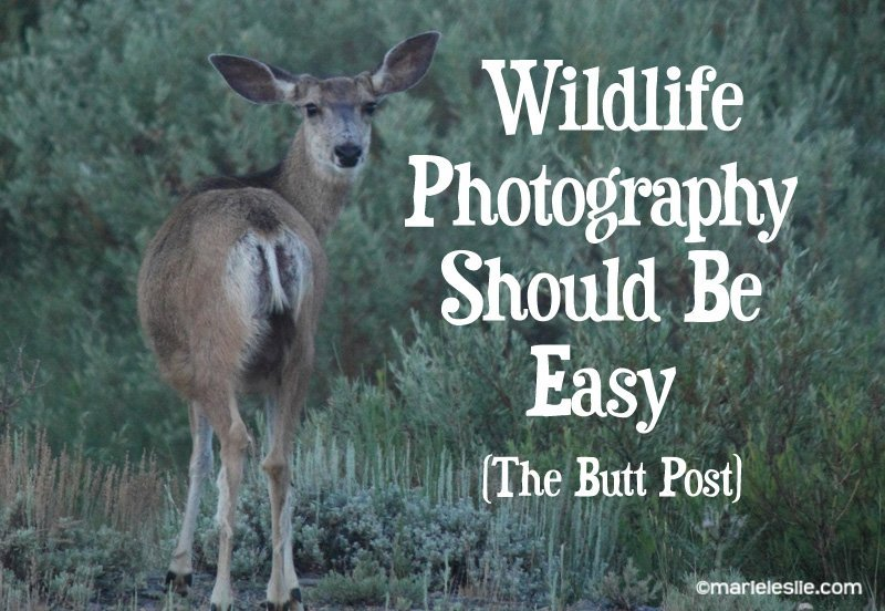 Wildlife Photography Should Be Easy–The Butt Post