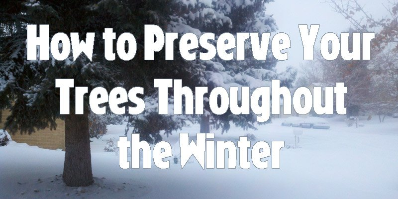How to Preserve Your Trees Throughout the Winter