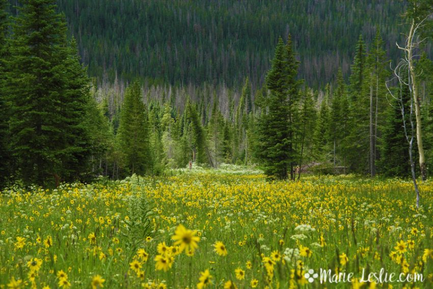 Wildflowers should be enjoyed unplucked where they grow
